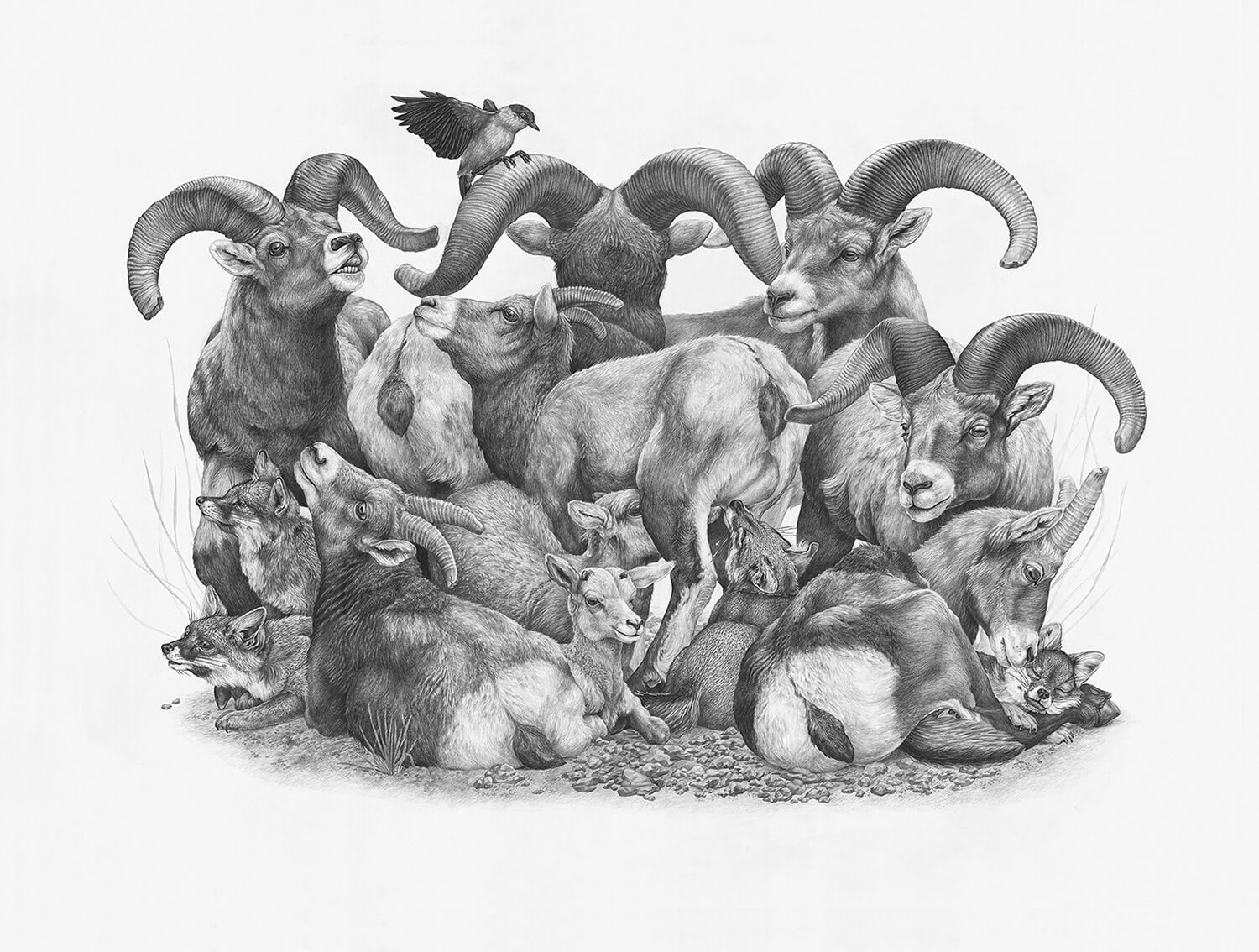 Group of rams