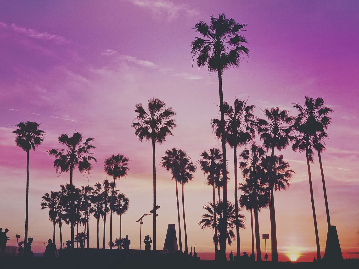 palm trees, purple sky,