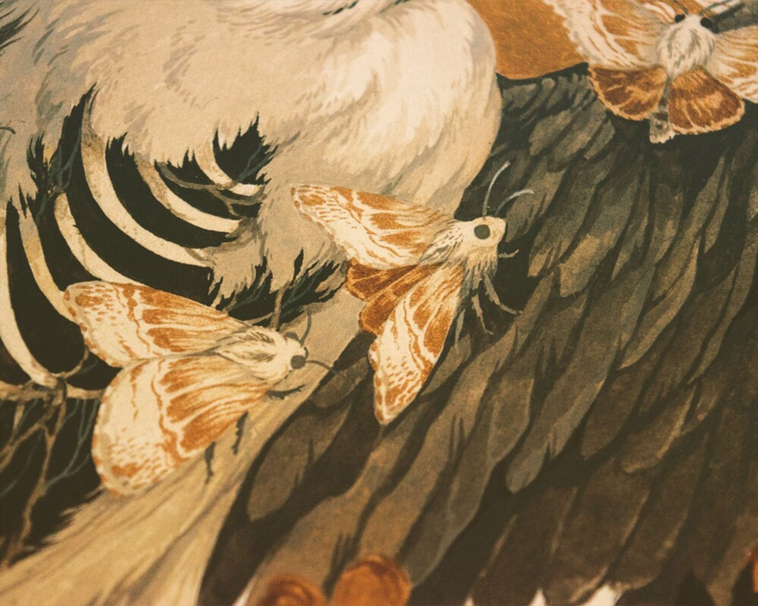 close up of bird illustration, moths