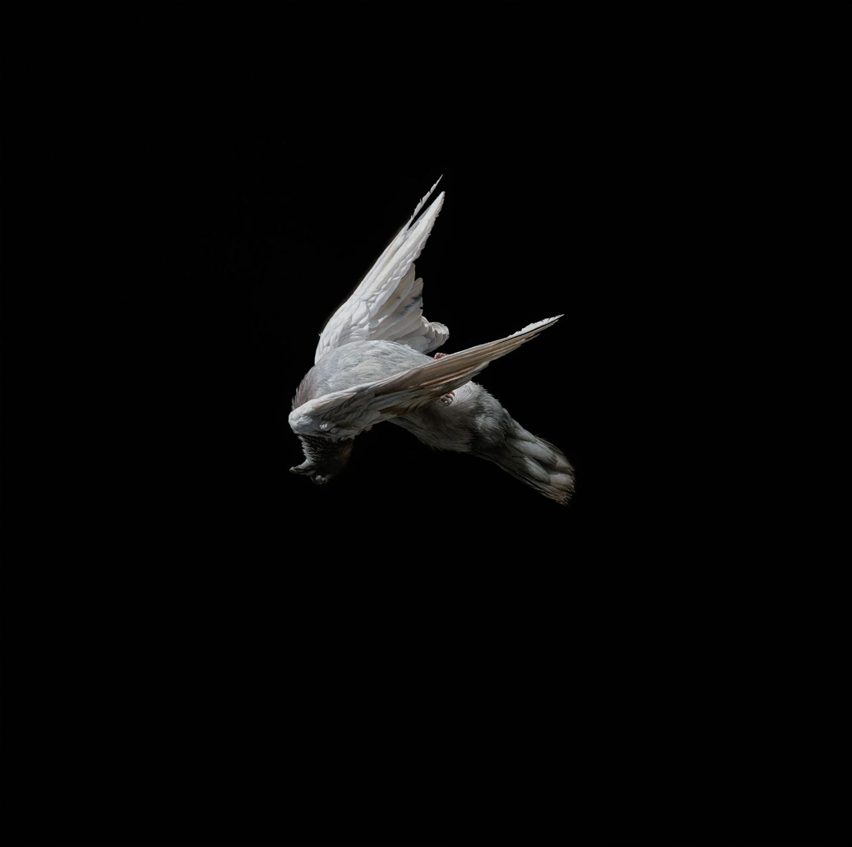 Jeremy Geddes - bird