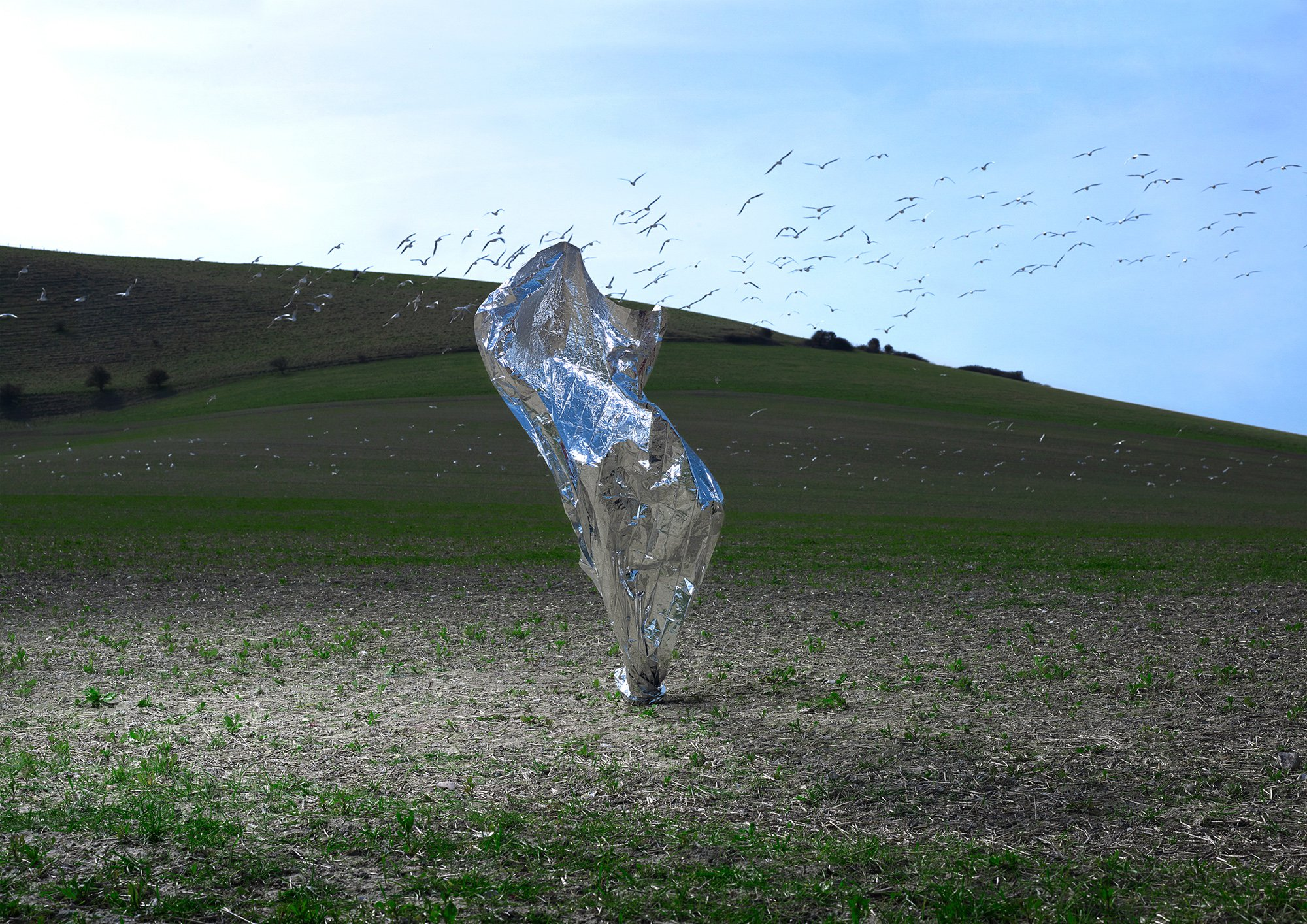 Transient Sculptures, metallic, birds