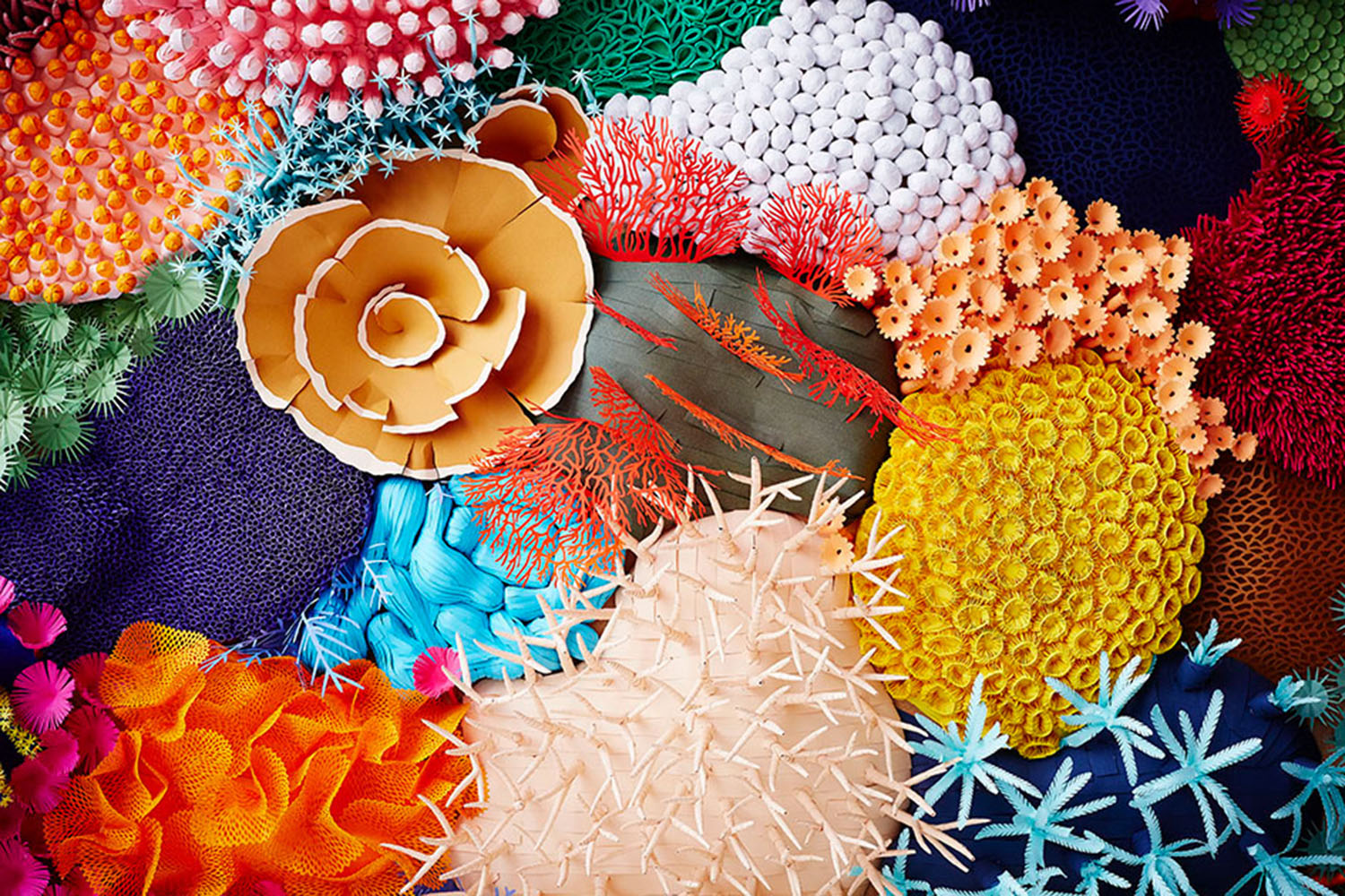 Paper coral detail by mlle Hipolyte