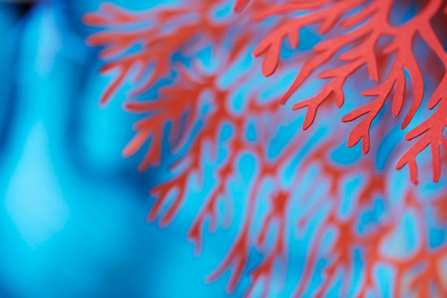 closeup of paper coral