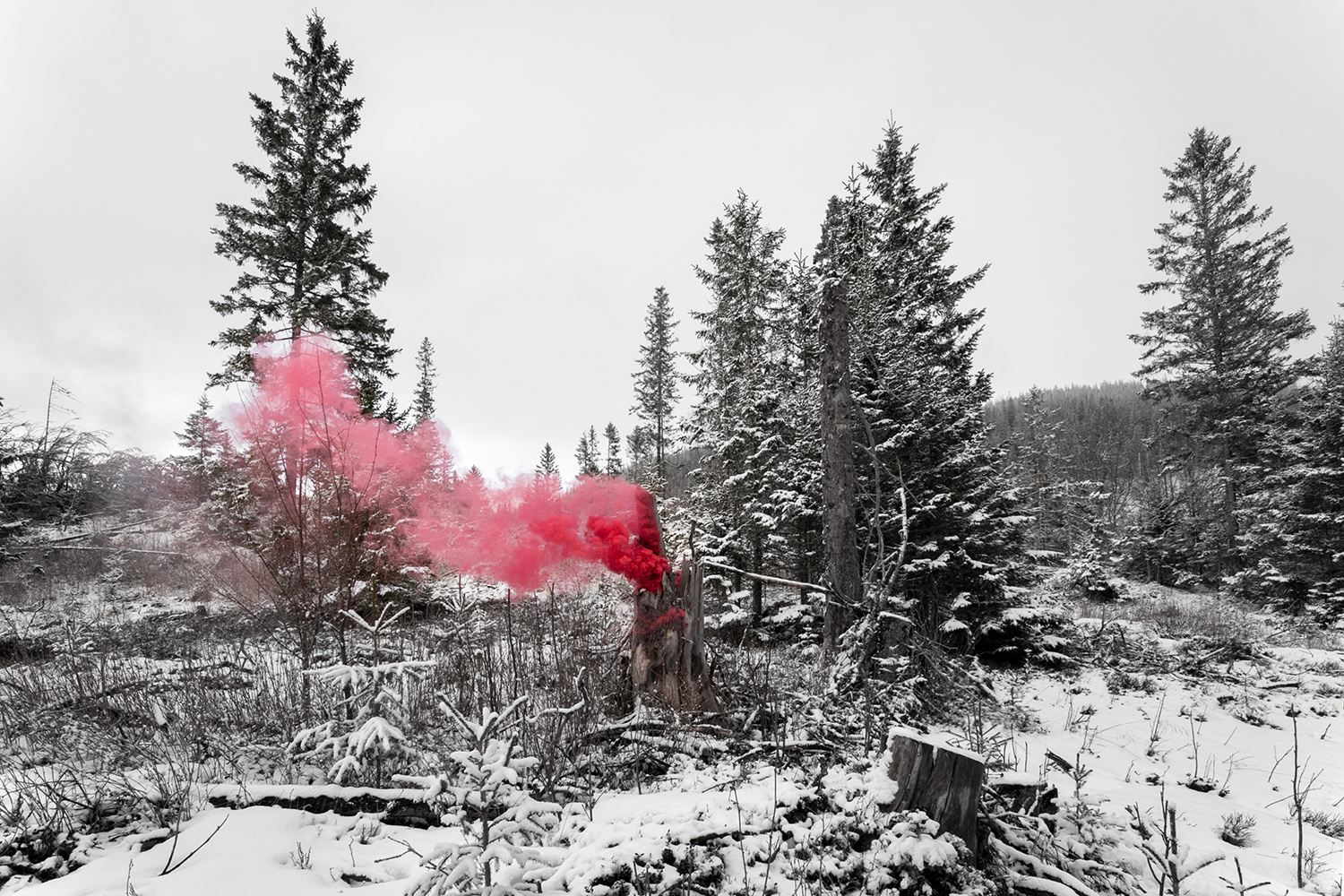 smoke in forest, photo installation