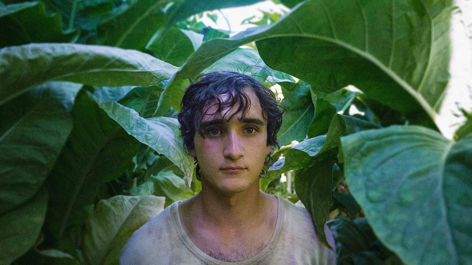 happy as lazarro, film still, boy in jungle