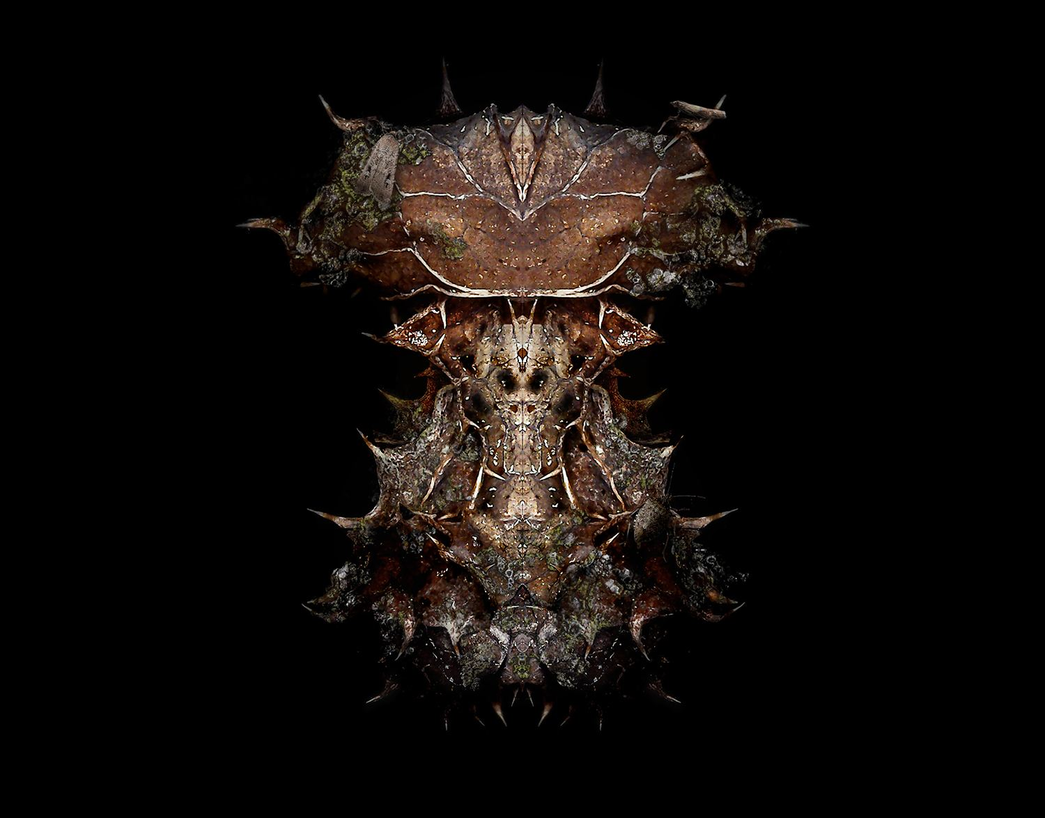 alien like, insect like, digital art, Found Awareness by Chris Slabber