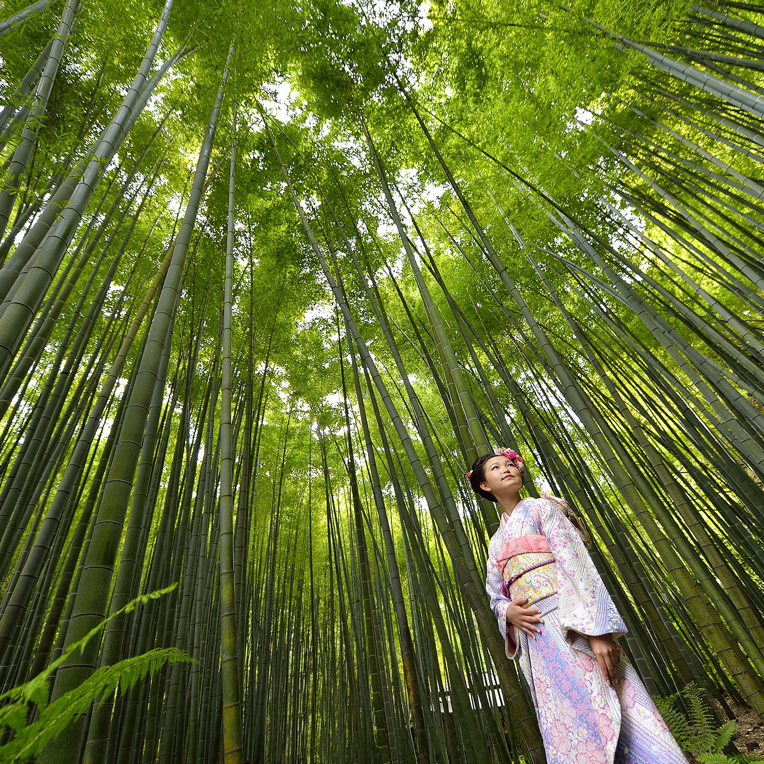 Coming of Age Photography by Ismail Niyaz Mohamed, bamboo forest, japan