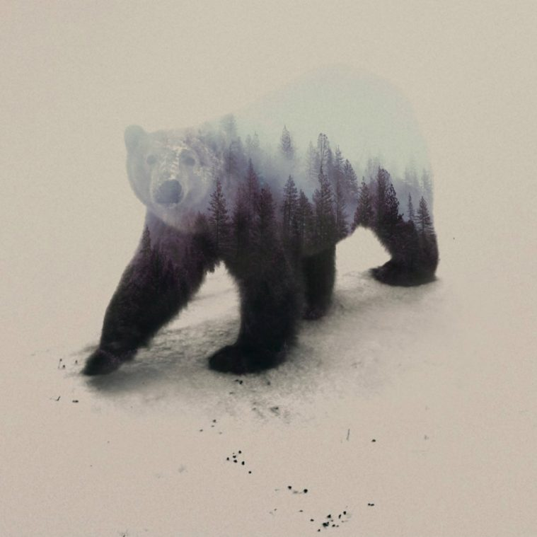 Double-Exposure Animals by Andreas Lie