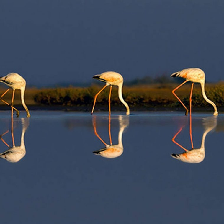 Bird Mirage Reflections