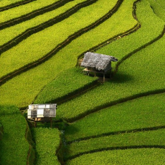 The Gorgeous Rice Terraces of Vietnam