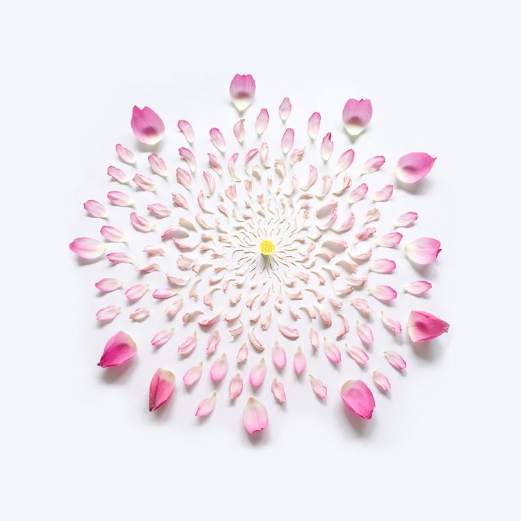 e_flowers_01