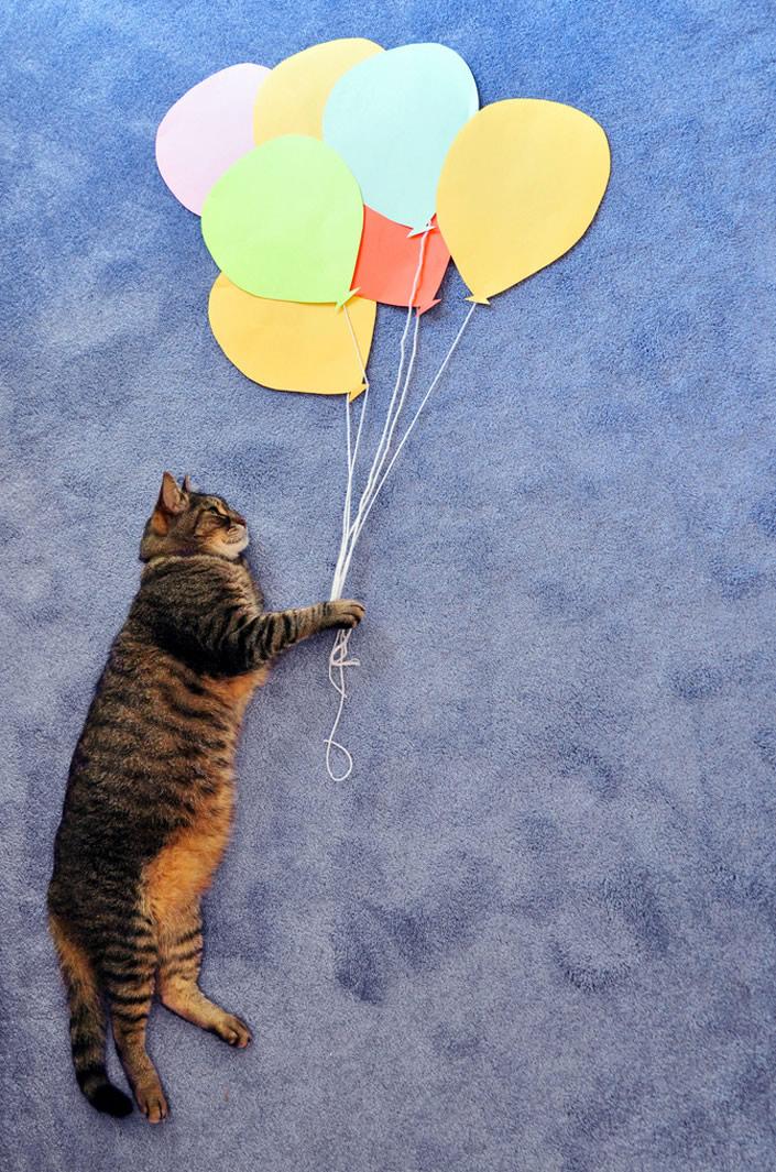 kittycat_03
