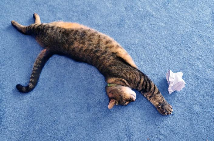 kittycat_04