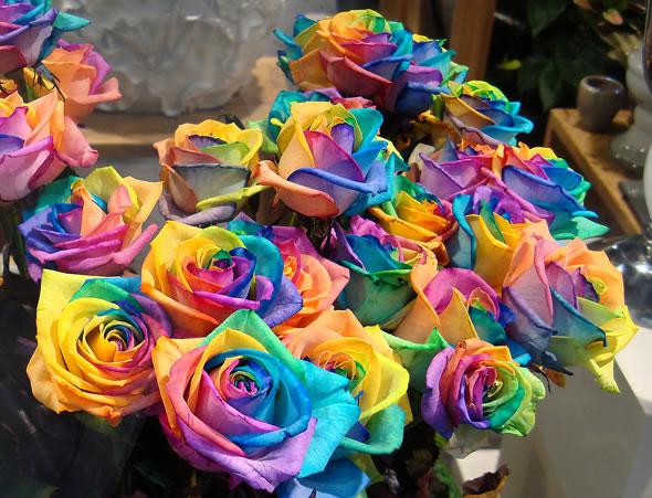 rainbow_roses_01