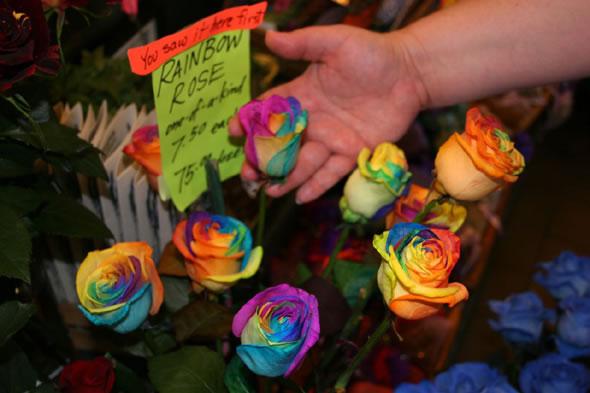 rainbow_roses_02